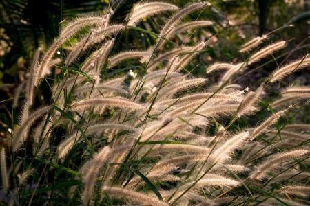 flora grasses Stock Photo