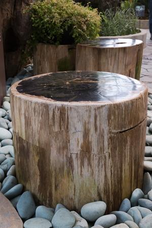 petrified: Petrified wood