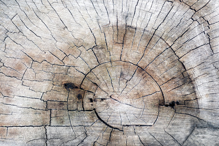 sectioned: Texture of stump Stock Photo