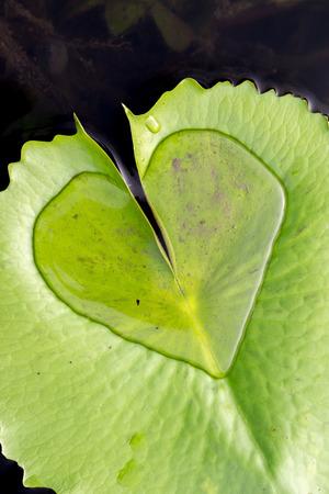 ハート形水滴 写真素材