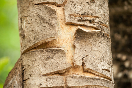 vandalize: Bark is the outermost layers of stems and roots of woody plants. Stock Photo