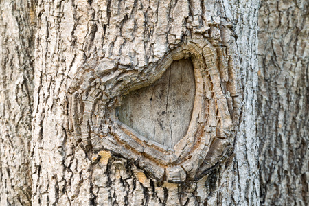 vandalize: Heart-shape bark tree