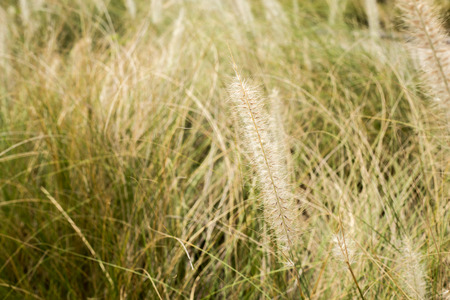 flora: flora grass