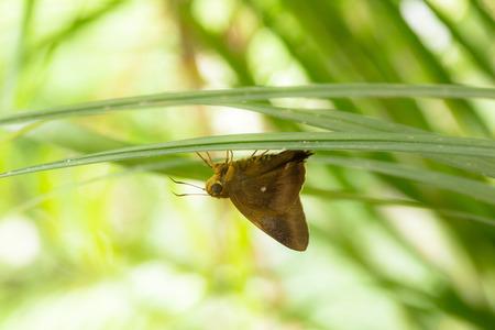 deceive: Moth