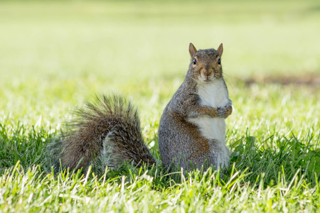 squirrel Stockfoto