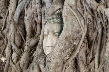 cabeza de buda: Cabeza de Buda en la raíces de los árboles Foto de archivo