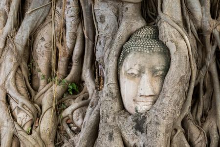 cabeza de buda: Cabeza de Buda en la ra�ces de los �rboles Foto de archivo
