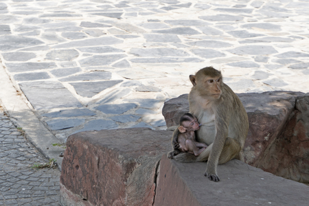 Monkeys in the park