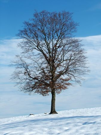 Lonely tree in winter Stock Photo - 299823