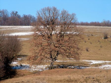 Rusty tree in a valley at January Stock Photo - 302342