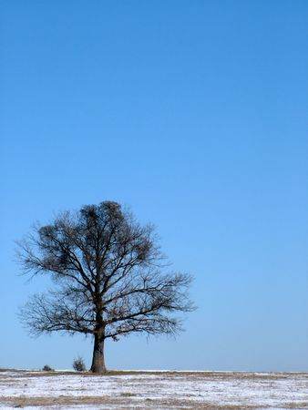 Single oak tree at winter Stock Photo - 302343