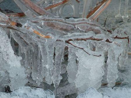 Frozen bush Stock Photo - 305790