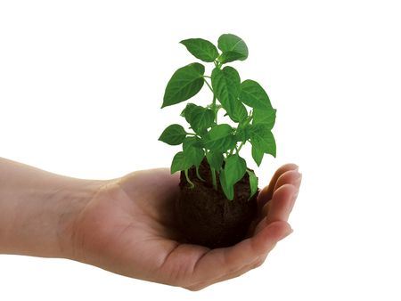 Holding a new plant
