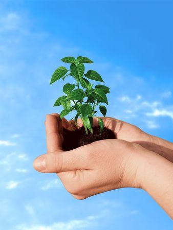 life giving birth: Sostener una planta nueva