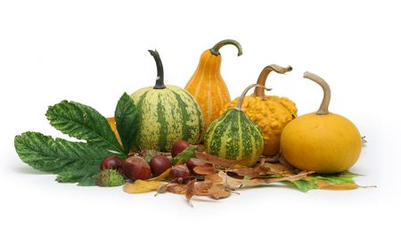 Collection of decorative autumn-related plants photo