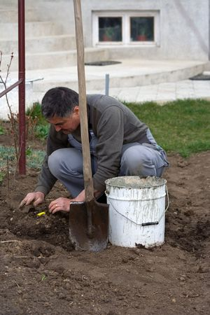 Plantar algunos �rboles en la primavera en el jard�n