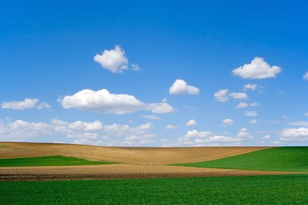 Green wheat and brown ploughland at springtime Stock Photo - 873559