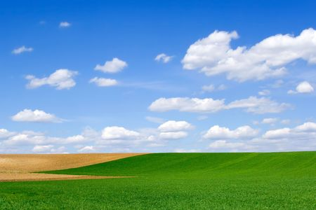 Green wheat and brown ploughland at springtime Stock Photo - 873561