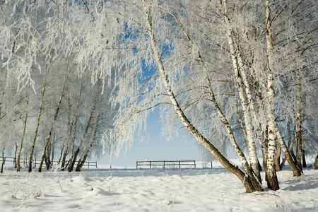 Cold winter day, beautiful hoarfrost and rime on trees Stock Photo - 2324403
