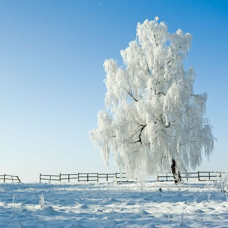Cold winter day, beautiful hoarfrost and rime on trees Stock Photo - 2324397