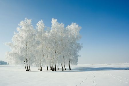 Cold winter day, beautiful hoarfrost and rime on trees Stock Photo - 2324398