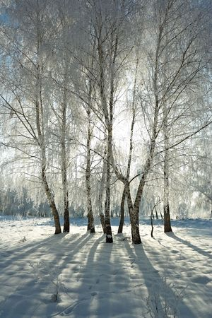 Cold winter day, beautiful hoarfrost and rime on trees Stock Photo - 2374906