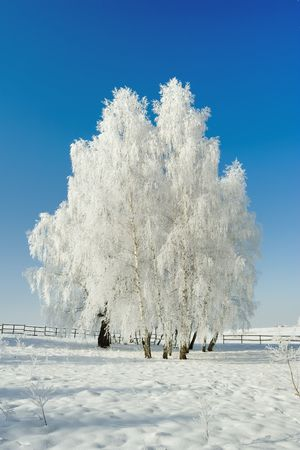 Cold winter day, beautiful hoarfrost and rime on trees Stock Photo - 2374898