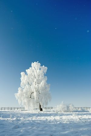 Cold winter day, beautiful hoarfrost and rime on trees photo