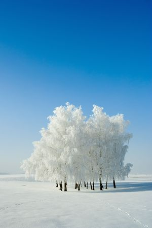 Cold winter day, beautiful hoarfrost and rime on trees Stock Photo - 2374897