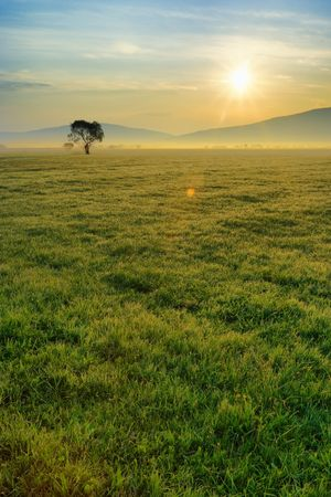 Green morning field, dewy grass, thin fog layer on the horizon and the warm, sparkling sun rays. (HDR)