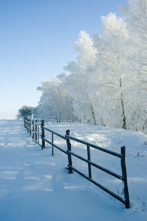 Cold winter day, beautiful hoarfrost and rime on trees Stock Photo - 4328462
