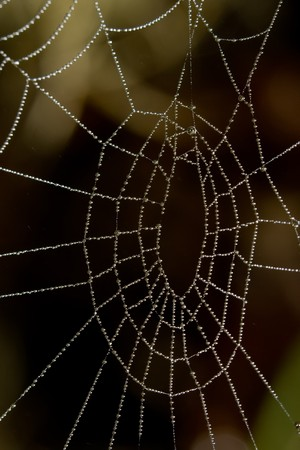 spider net: Water drops like beads on spider net
