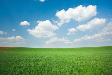 field and sky: Fresh green wheat field and blue cloudy sky; ideal for nature background