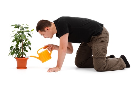 knelt: Casual young man watering Ficus Benjamina with yellow sprinkling can