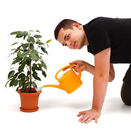 sprinkling: Casual young man watering Ficus Benjamina with yellow sprinkling can