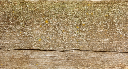 Natural fir wood texture with lichen, cracks and knots Stock Photo - 16059621