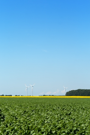 Windmills behind green field, big copy space sky above Stock Photo - 16059566