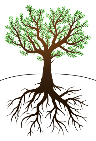 Tree illustration with green leaves and roots