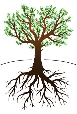 plant with roots: Ilustraci�n del �rbol con hojas verdes y ra�ces Vectores