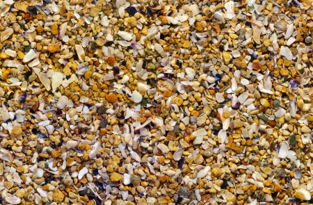 Pebble Beach: Sea sand texture made of shell and stone pieces  Seamless texture