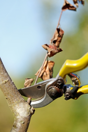 Pruner cutting down dry tree branch Stock Photo - 22162917
