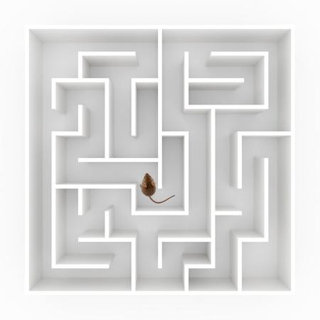 mice: Vista superior de un peque�o rat�n (Mus musculus) encontrar su camino en el laberinto Foto de archivo