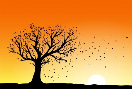 viento soplando: Silueta de �rbol de oto�o en la puesta del sol, el viento soplando las hojas que caen