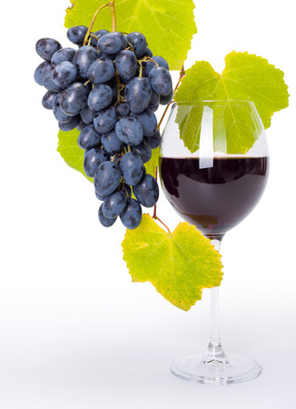 Glass of red wine with hanging blue grape cluster along leaves photo