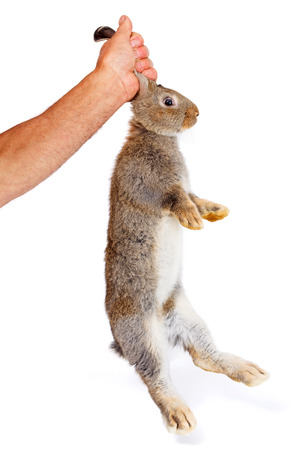 bunnie: Mans hand holding a young brown rabbit from its ears Stock Photo