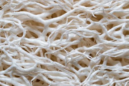 extreme macro: Extreme macro of luffa sponge fibers Stock Photo