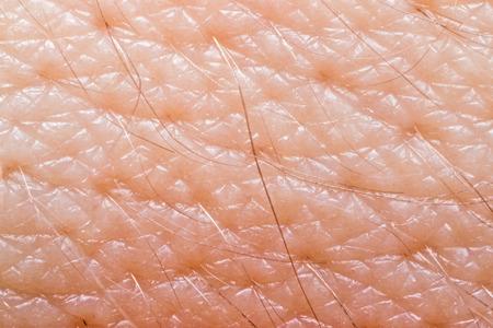pili: Macro of human skin on the hand wrist