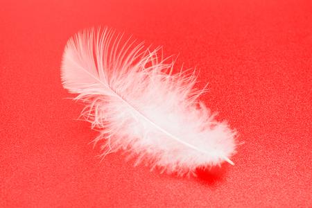 animalitos tiernos: Una peque�a pluma blanca sobre fondo rojo con textura