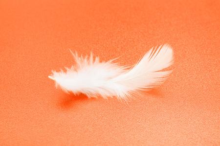 piuma bianca: Una piccola piuma bianca su sfondo arancione con texture
