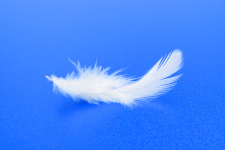 One small white feather on textured blue background